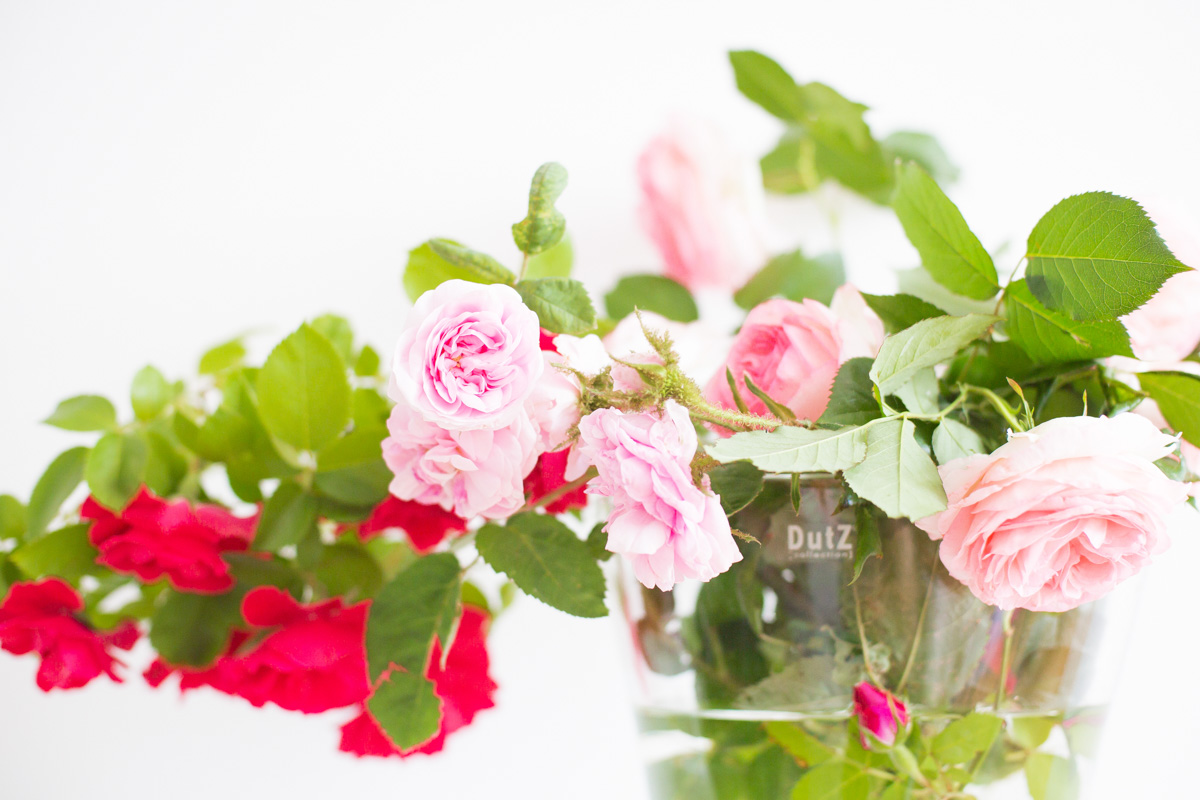 SomePro Stilleben Blumenstrauss Rosen